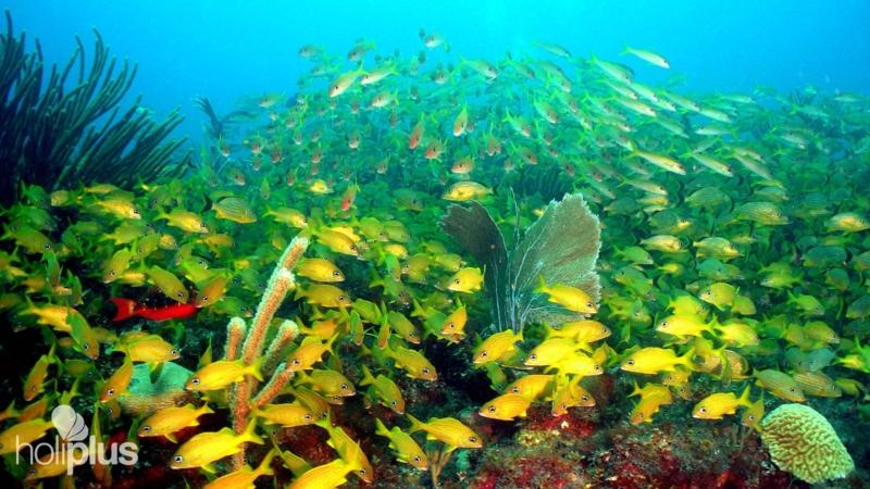 Book scuba diving tour in jardines del rey departure for Jardines del rey cuba