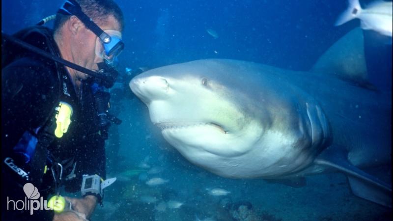 Diving Show With Bull Sharks Santa Lucia Beach Camaguey